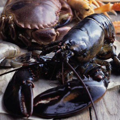 Hummer (1kg) - Webshop - Glyngøre Shellfish