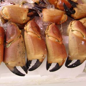 Taskekrabbeklør (2kg) - Webshop - Glyngøre Shellfish